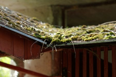 What to do about moss on the roof